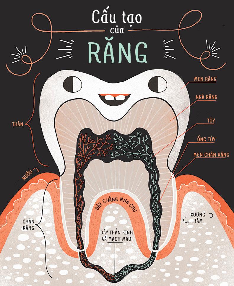 Điều trị tủy răng bao nhiêu tiền