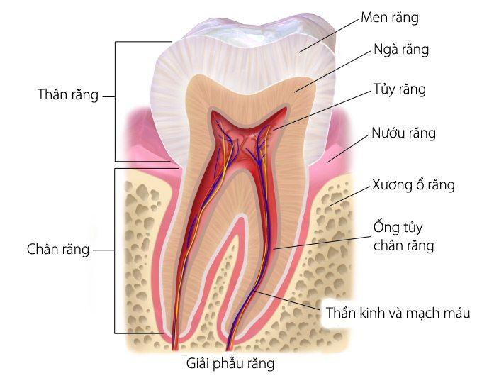 Nhận biết viêm tủy răng và cách điều trị