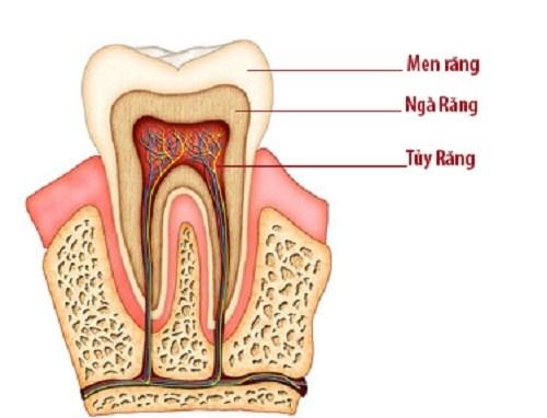 bảo vệ tủy răng