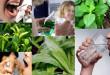 5 cách hiệu quả & đơn giản chữa hôi miệng từ thiên nhiên ai cũng làm được
